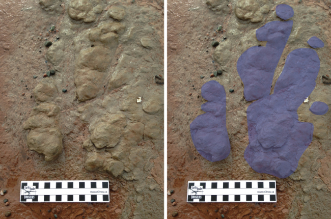 Wasson Bluff dinosaur footprint Nov 2014