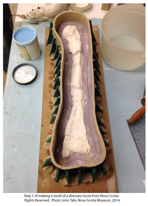 Making mold of dinosaur bone from Nova Scotia