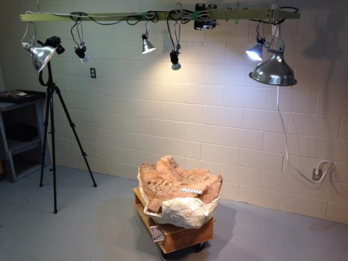 3d Scanning of Jurassic Dinosaurs from Nova Scotia