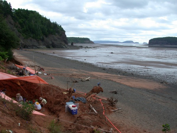 Bay of Fundy Dinosaur Site Citizen Science